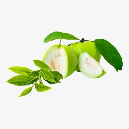 Leafy Guava