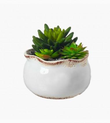 Jade Plant Pot