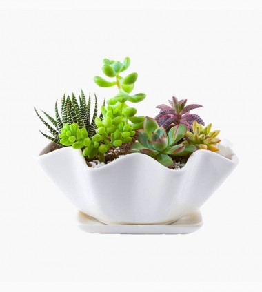 Aroez Ceramic Pot